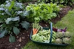 Благодаря бифогуму вы соберете хороший урожай