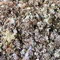 Комплекс Litterplant содержится в составе Агропланта