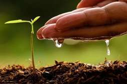 Эффект Агрохелпа - в удержании влаги в почве, корневой системе.