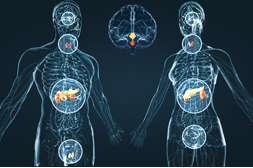 Положительно воздействует на эндокринную систему средство Грифола.