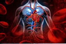 С препаратом Кардиаль очищаются сосуды от холестериновых бляшек.