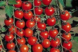 Удобрение Агросев био повышает урожайность.