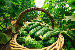 Польза Корнефит и Гардефит в повышении урожайности.
